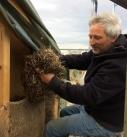 Getrocknetes Seegras aus der Ostsee wird in die Gefache gestopft. Foto: Seegrashandel